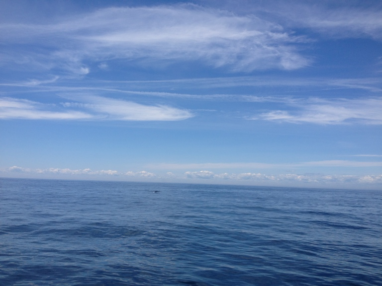 In der Bildmitte erahnt man den Finwal