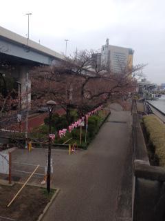 Arakawa River Bank in Bloom