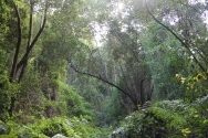 Wanderung zum Cubo de La Galga