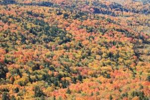 Maines brennende Wälder