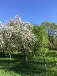 Springtime in Leipzig