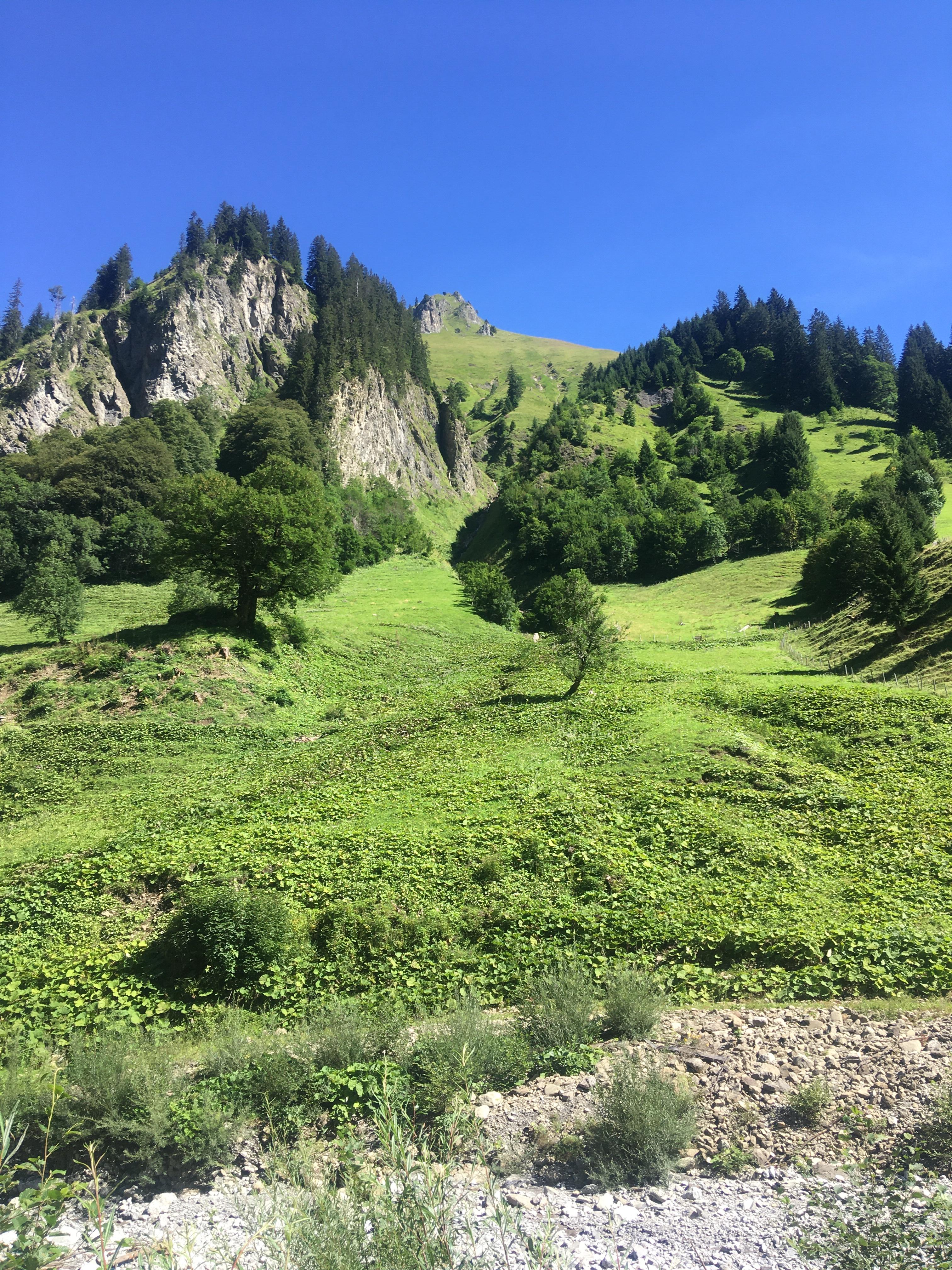 Oberhalb der Spielmansau bei Oberstdorf