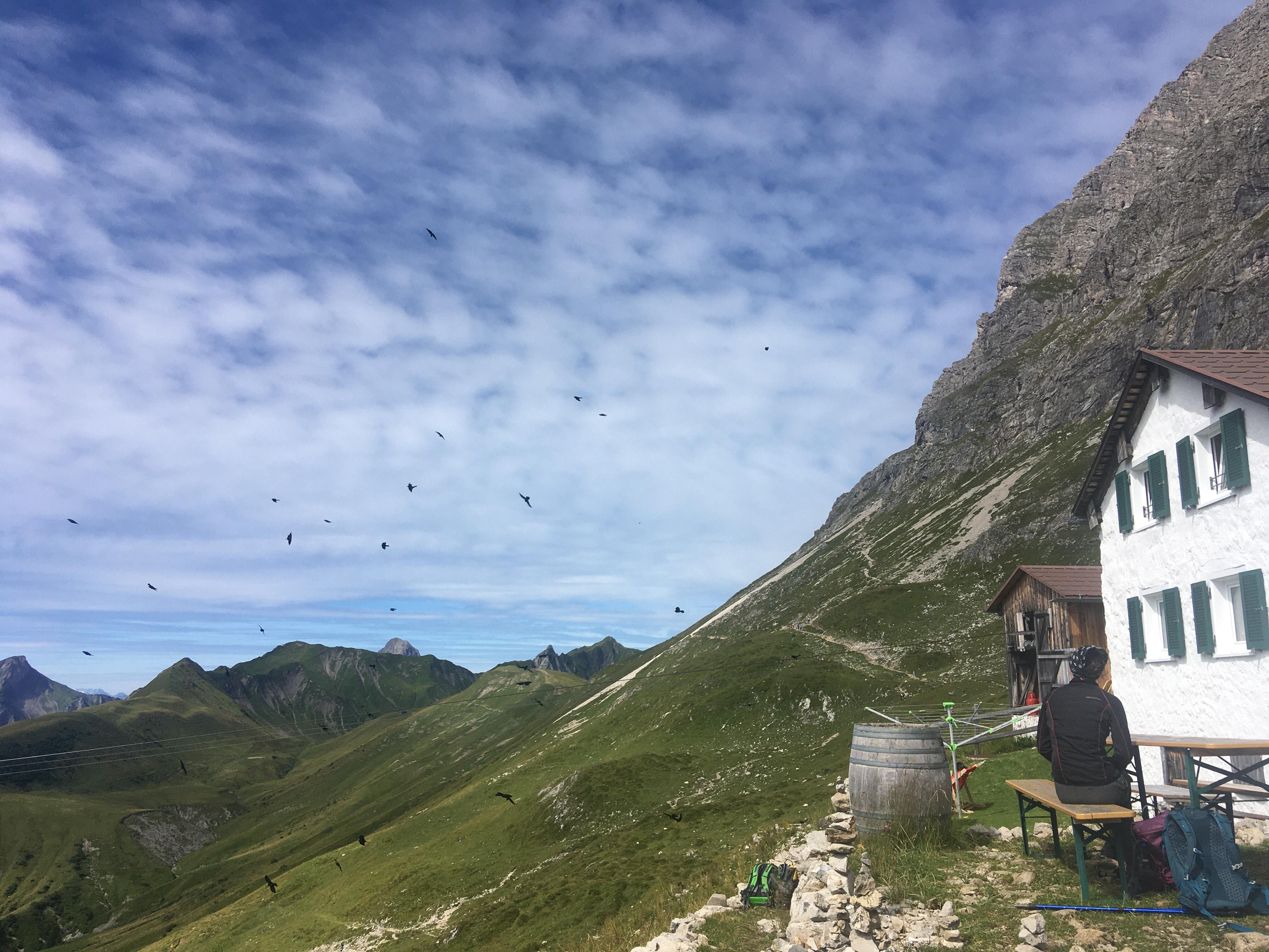 Dohlen an der Widdersteinhütte (Kleinwalsertal)