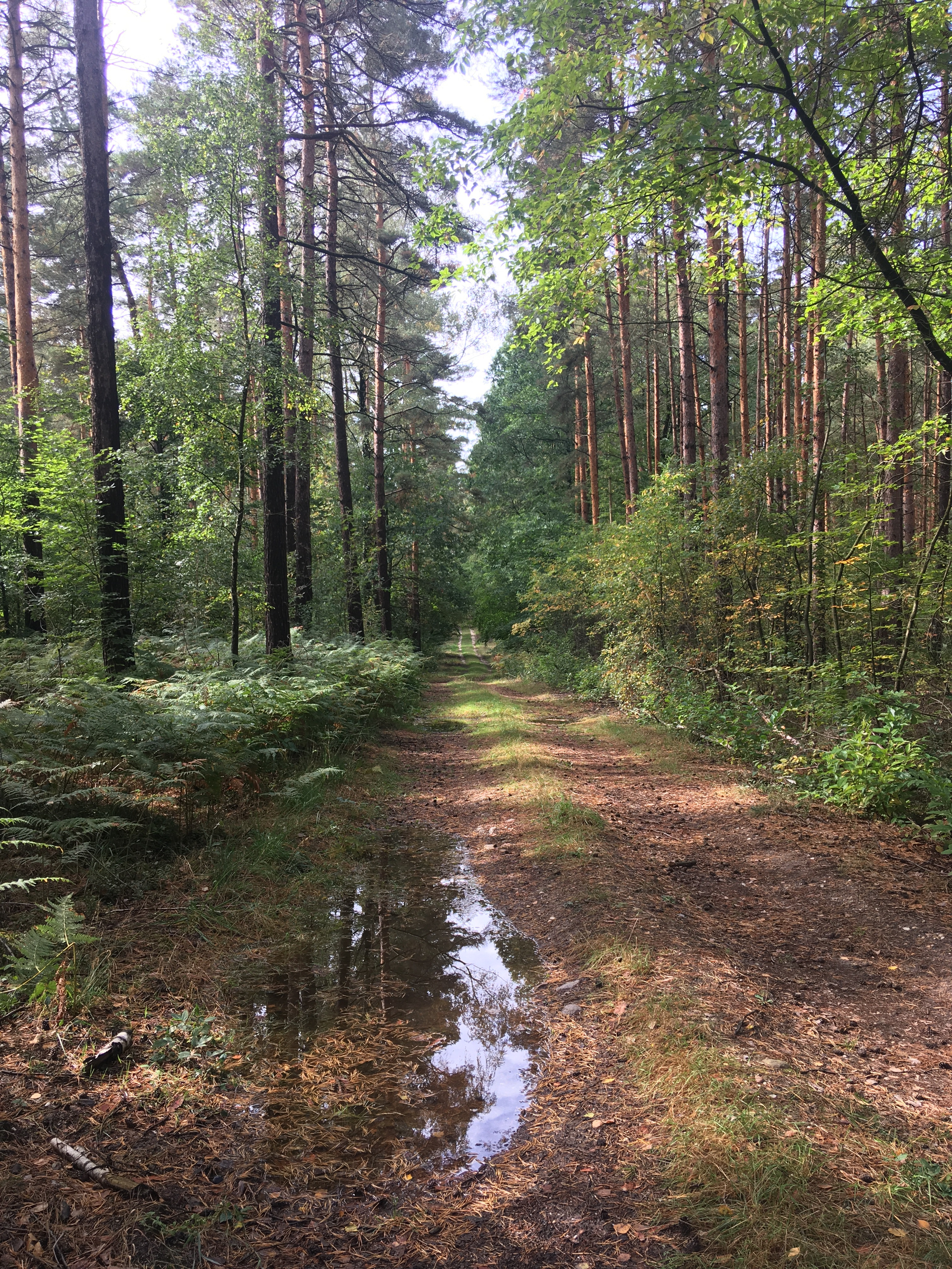 Waldweg in der Dübener Heide