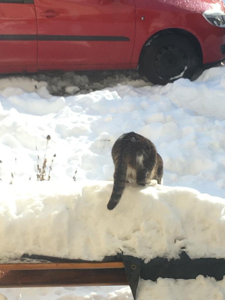 Katze auf Schneehaufen